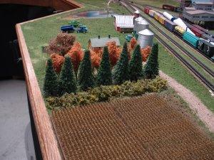 Farm tree rows.JPG
