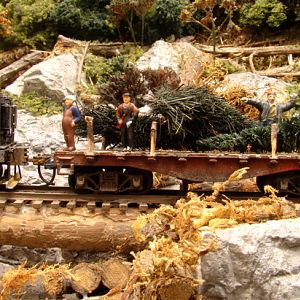 Logging Christmas trees in Eastern Tennessee