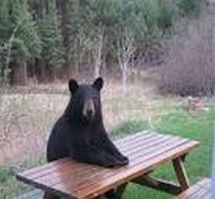 picnicbear.jpg
