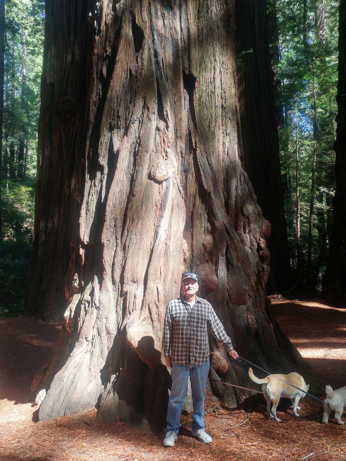 Sherrel Redwood.jpg