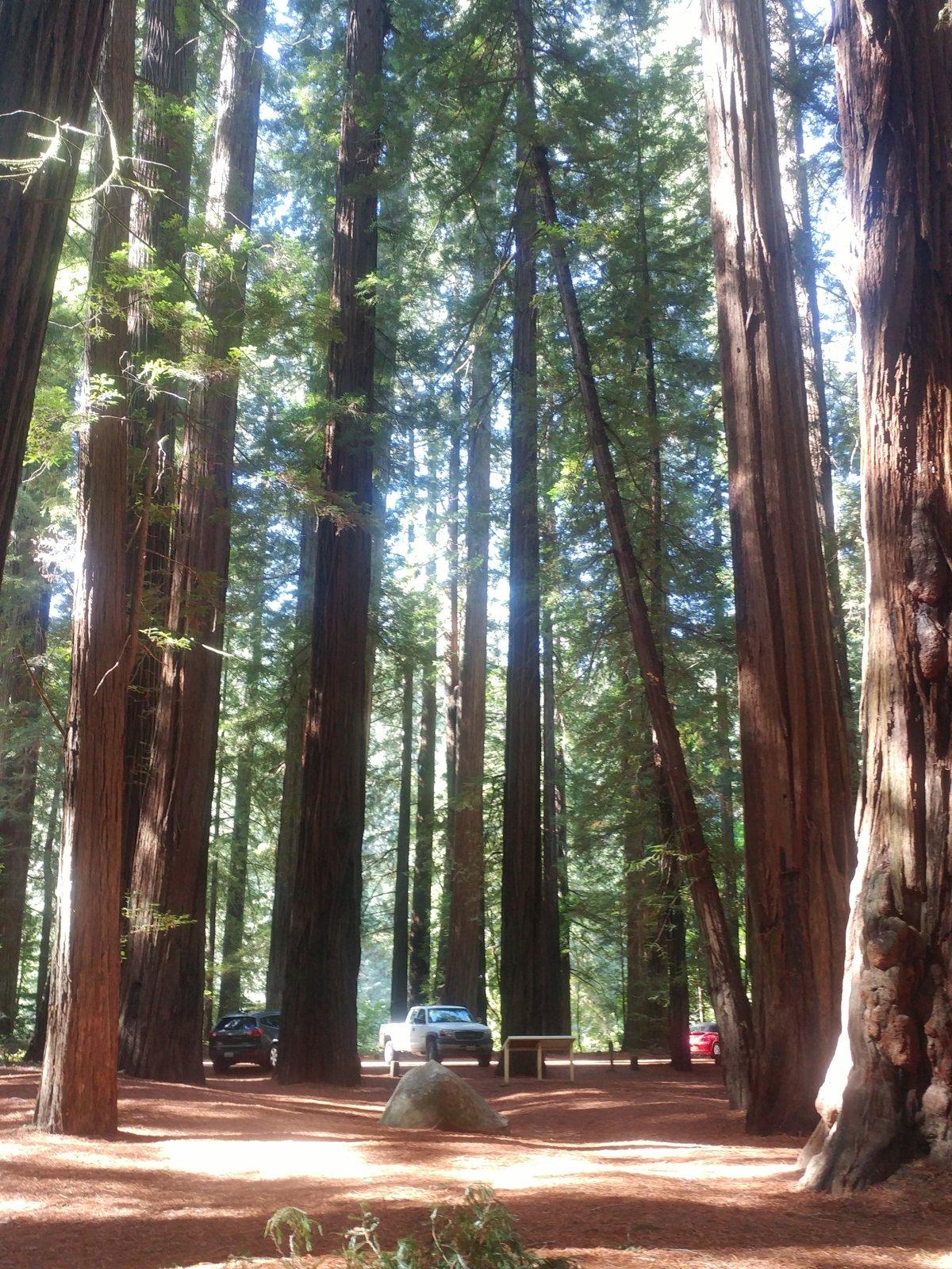 Sherrel Redwood2.jpg