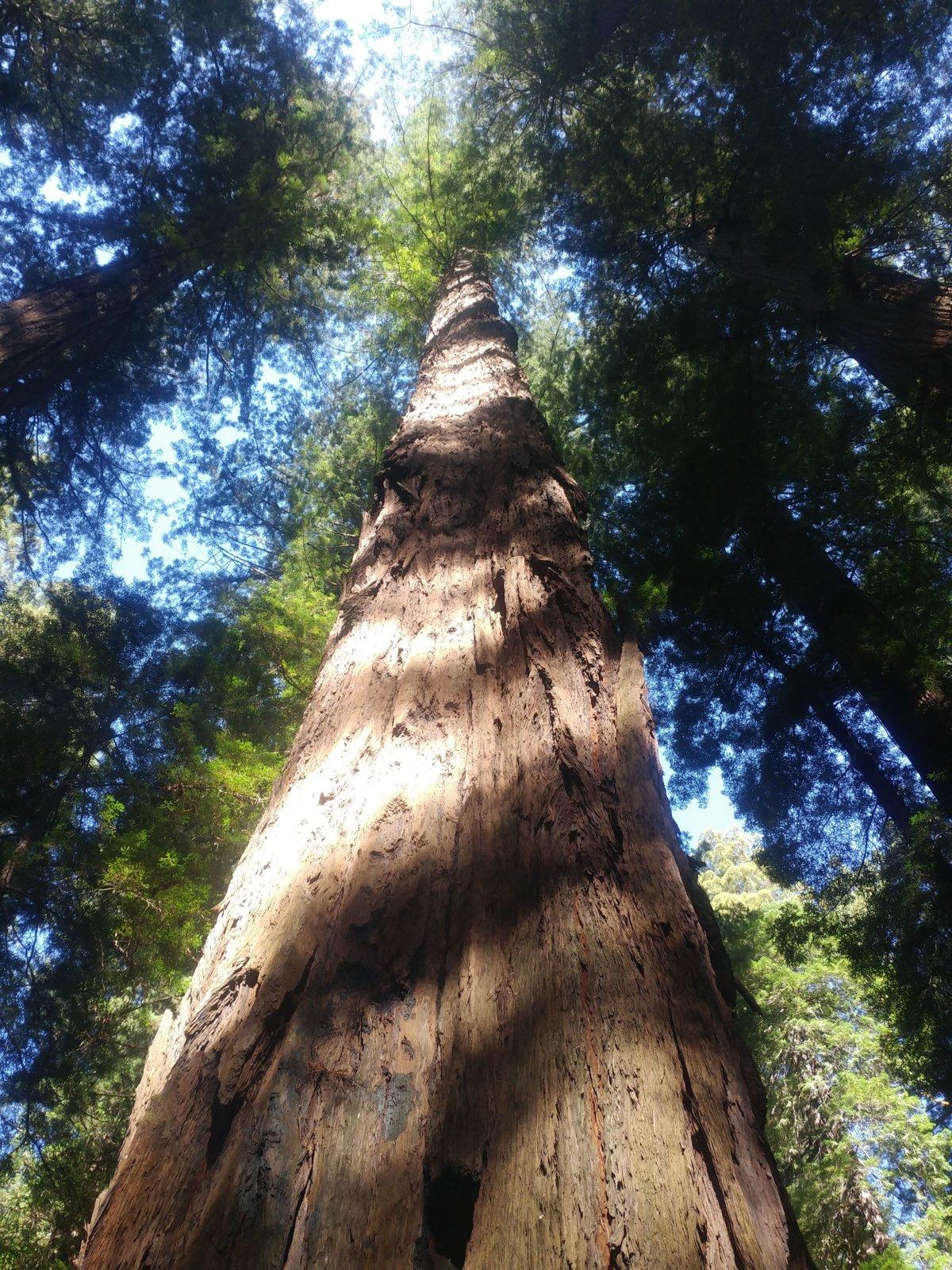 Sherrel Redwood4.jpg